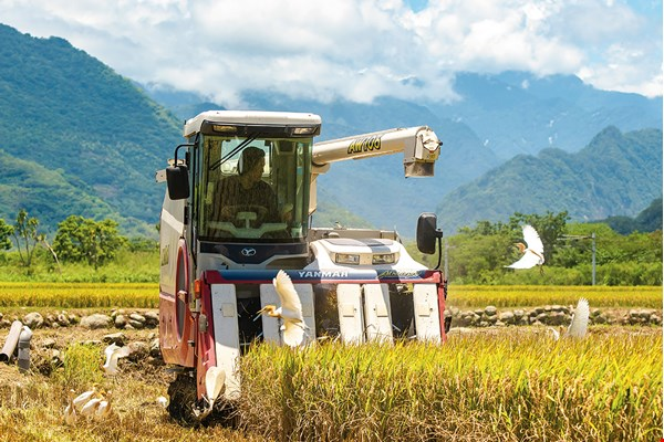 When you cultivate rice by eco-friendly methods, the land repays you with a bountiful harvest.